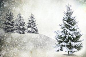 Belgai Kalėdų eglutėms suteiks antrą gyvenimą