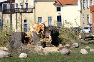 Vyras įsilipo į medį ir taip bandė apsaugoti jį nuo kirtimo