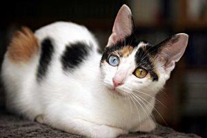 Tarptautinėje parodoje – ir laimę nešančios japonų katės