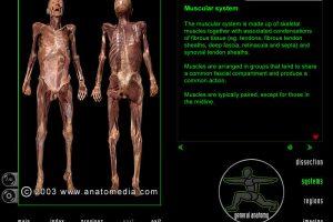 """Virtualūs skrodimai: programa, skirta """"pjaustyti"""" žmogaus kūną"""