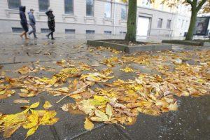 Šlapi lapai kelia pavojų