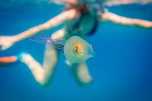 Menas išgyventi: medūzos viduje plaukiojo gyva žuvis