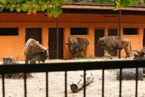 Zoologijos sode gyvenantiems stumbrams  – nauji  namai