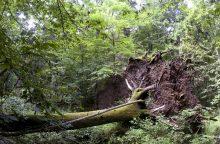 Lenkija pradeda kirsti medžius, nepaisydama žaliųjų protestų