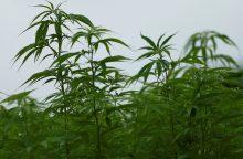 Žolininkė: saujelėje kanapių sėklų – pusė magnio paros dozės