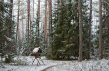 Dvi savaites miškai – po padidinamuoju stiklu