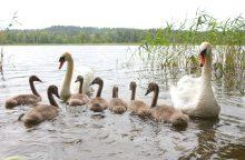 Specialistai nepritaria cheminiam Lietuvos ežerų valymui