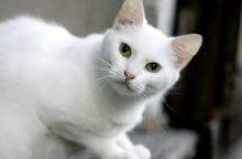 Nuo pasiutligės mirė britas, kuriam Maroke įkando katė