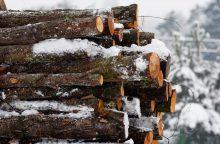 Ministras apie naują kertamo miško apskaitos tvarką: tikimės efekto