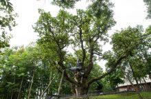 Paaiškės Lietuvos medžių rinkimų nugalėtojas