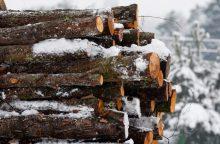 Rangovai atsisako Valstybinių miškų urėdijos siūlomų darbų, kol neperžiūrėtos sąlygos