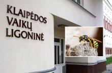 Netikėta ugniagesių misija: Klaipėdos vaikų ligoninę gelbėjo nuo širšių