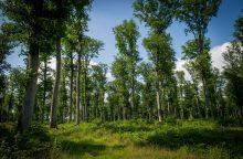 Valstybės kontrolė: miškams skirti milijonai panaudoti ne pagal paskirtį