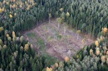 Nori griežtinti sodybų atstatymą miške: kas keistųsi?