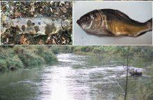 Gaištančių žuvų skandalas: valstybės institucijos mėto ir slepia pėdsakus?