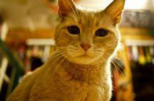 Nugaišo Aliaskos miestelio garbės meras – katinas