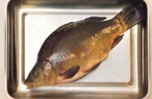 Auga Lietuvos žuvininkystės potencialas