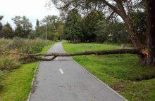 Mieste – priešprieša dėl medžių