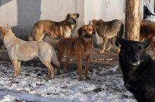 Baugina šunų gaujos