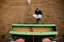 Kada žemdirbiai gali pretenduoti į ES tiesiogines išmokas?