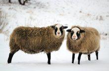 Gyvulių prieglauda Trakų rajone, kur mirtis skerdykloje nebegresia