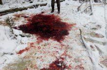 Kas Kauno rajone nušovė elnius?