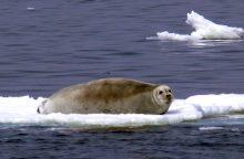 Pasaulio klimatas atšils dviem laipsniais jau 2050-aisiais
