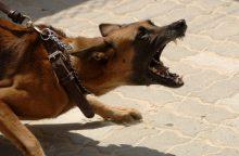 Ministrai nenori naikinti pavojingų šunų sąrašo