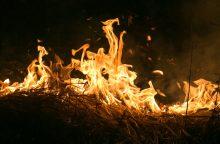 Pabradėje per karines pratybas išdegė hektaras miško