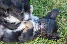 Kokių taisyklių reikia laikytis gyvūnų šeimininkams?