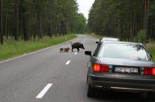 Šiemet automobiliai su gyvūnais susidūrė daugiau nei 1,2 tūkst. kartų