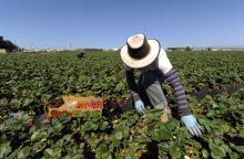 Teisininkas: legalios įdarbinimo agentūros gali parduoti į vergovę užsienyje