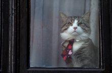 Ekvadoras paragino J. Assange'ą prikąsti liežuvį ir rūpintis savo katinu