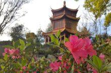 Pažintis su kinų klasikiniu sodu, kurio uolos primena liūtus
