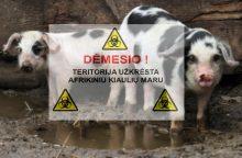 Žemės ūkio viceministrės pozicijai – Lietuvos kiaulių augintojų asociacijos kritika