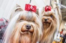 Skaitymo sutrikimų turintiems vaikams padeda šunys