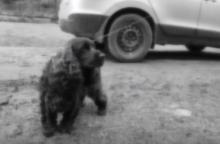 Šiurpus nutikimas Čekijoje: taksi automobilis grindiniu vilko šunį