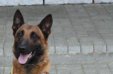 Tarnybinių šunų atminimo įamžinimui žmonės jau paaukojo 2,7 tūkst. eurų