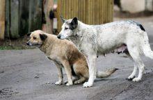Kankinti gyvūnus draudžiama, tačiau pažeidėjai nebaudžiami