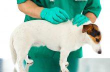 Pro langą išmesto šuns veterinarai neišgelbėjo