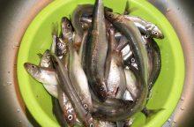 Ar nepritrūksime šviežios žuvies?