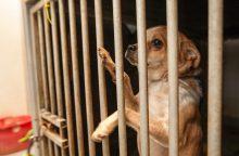 Gyvūnų globėjų vaidai: santykius aiškinasi teisme
