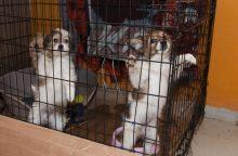 Gyvūnų prieglaudai – sunkios dienos